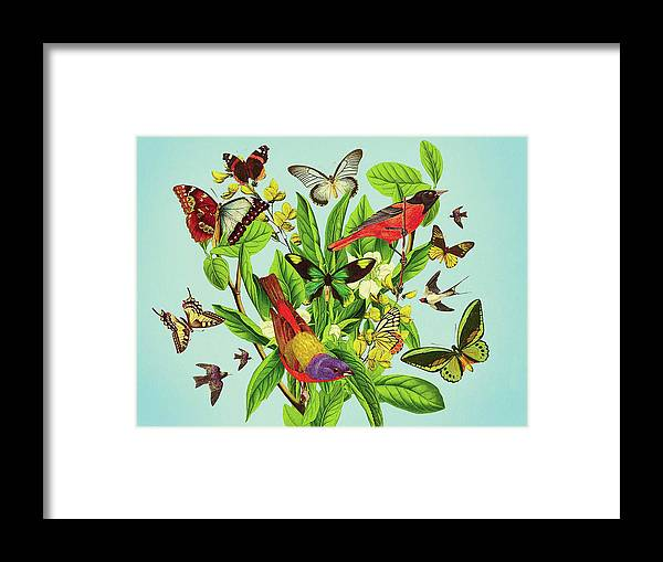 Butterflies And Birds On Plant And Flower Stem Framed Print by Mark ...