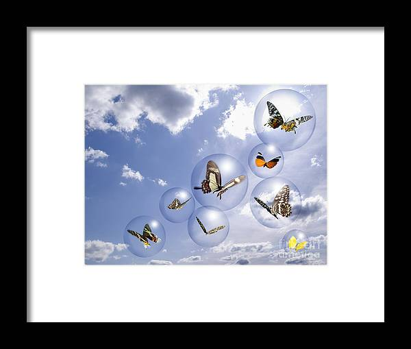 Insects Framed Print featuring the photograph Butterflies And Bubbles by Tony Cordoza