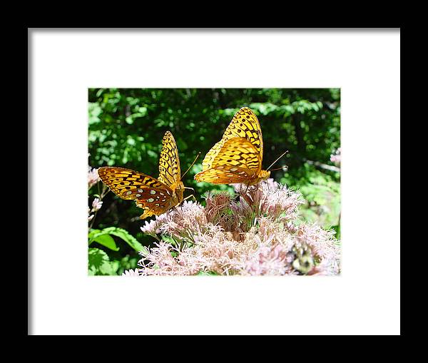 Nature Framed Print featuring the photograph Butterflies by Eric Workman