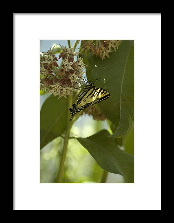Flower Framed Print featuring the photograph Butterfly 1 by Sara Stevenson