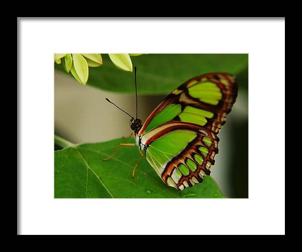 Butterfly Framed Print featuring the photograph Butterfly 2 by Scott Gould