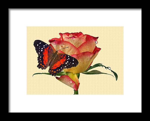 Butterfly Framed Print featuring the photograph Butterfly 3 by Manfred Lutzius
