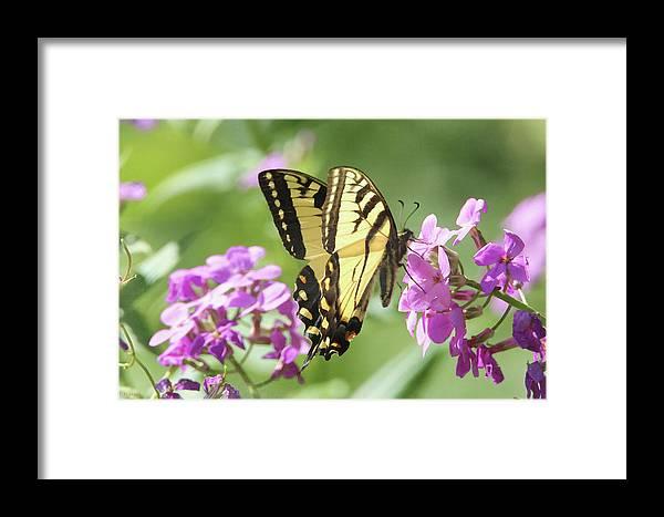 Butterfly Framed Print featuring the digital art Butterfly #9 by David Stasiak