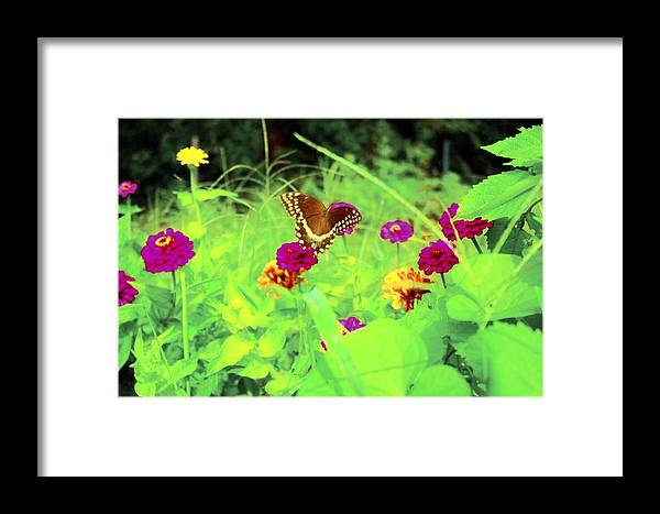 Flowers Framed Print featuring the photograph Butterfly At Work by Jill Tennison