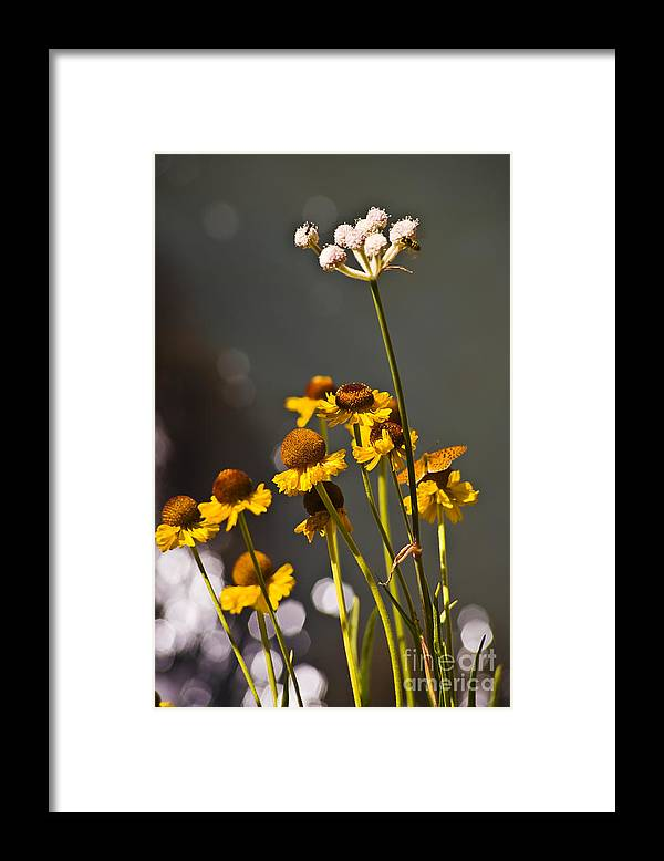 Landscape Framed Print featuring the photograph Butterfly Bee and Ant by Greg Clure