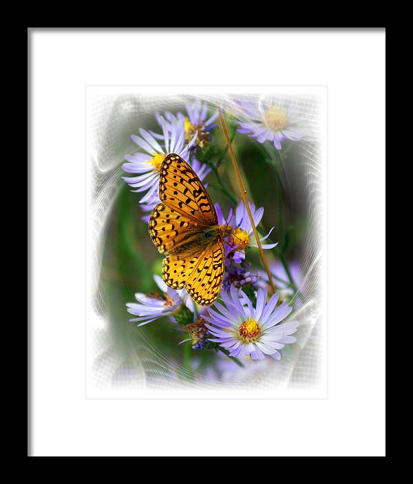Butterfly Framed Print featuring the photograph Butterfly Bliss by Marty Koch