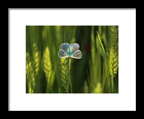 Framed Print featuring the photograph Butterfly by Cata Deka