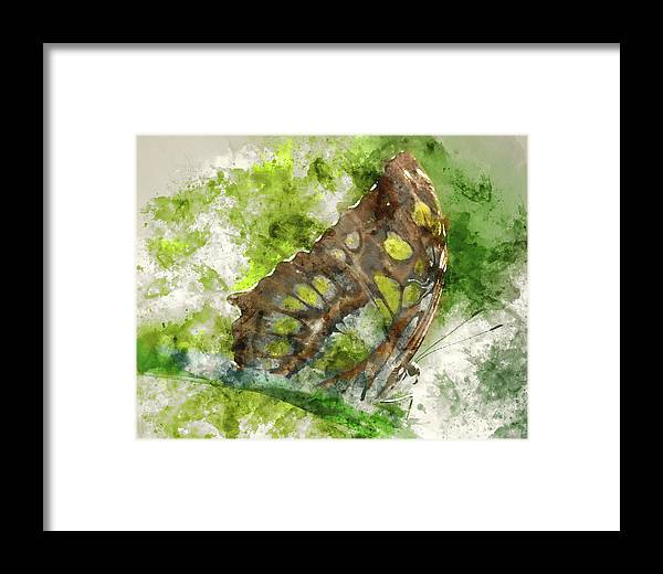 Animal Framed Print featuring the painting Butterfly Close Up Digital Watercolor On Photograph by Brandon Bourdages