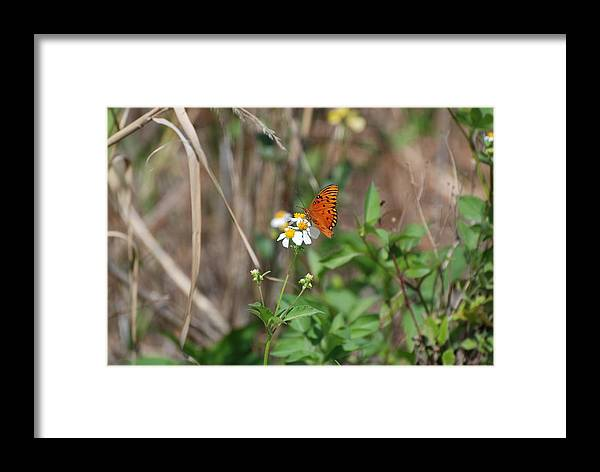Butterfly Framed Print featuring the photograph Butterfly Flower by Rob Hans