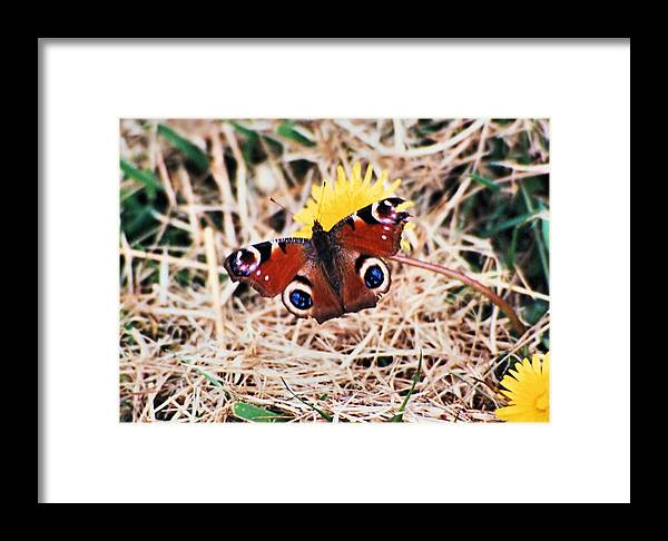 Ireland Framed Print featuring the photograph Butterfly In Ireland by Ellen Lerner ODonnell