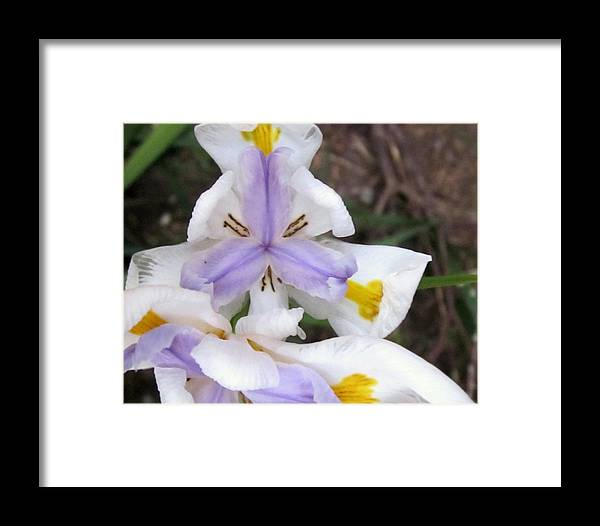 Framed Print featuring the photograph Butterfly Iris by Miss McLean
