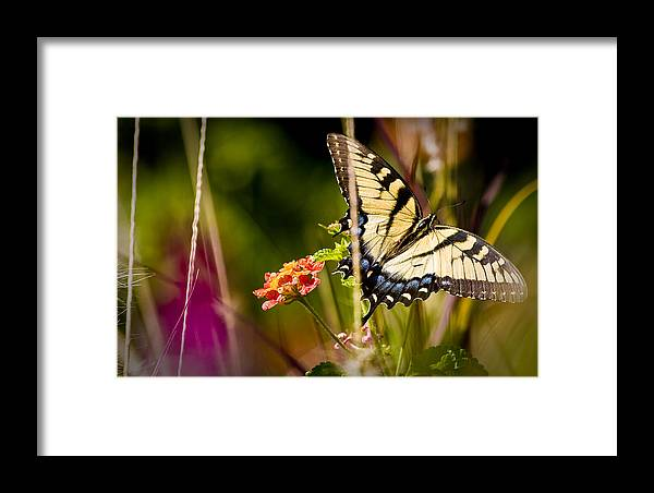 Nature Framed Print featuring the photograph Butterfly Jungle by Ches Black