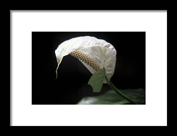 Flower Butterfly Framed Print featuring the photograph Butterfly by Marcus Best