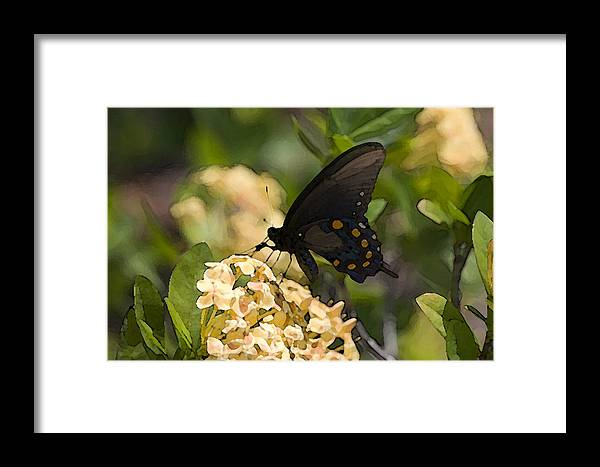 Butterfly Framed Print featuring the digital art Butterfly On Flower by Christopher Purcell