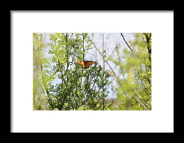 Butterfly Framed Print featuring the photograph Butterfly On Schrub by Thor Sigstedt