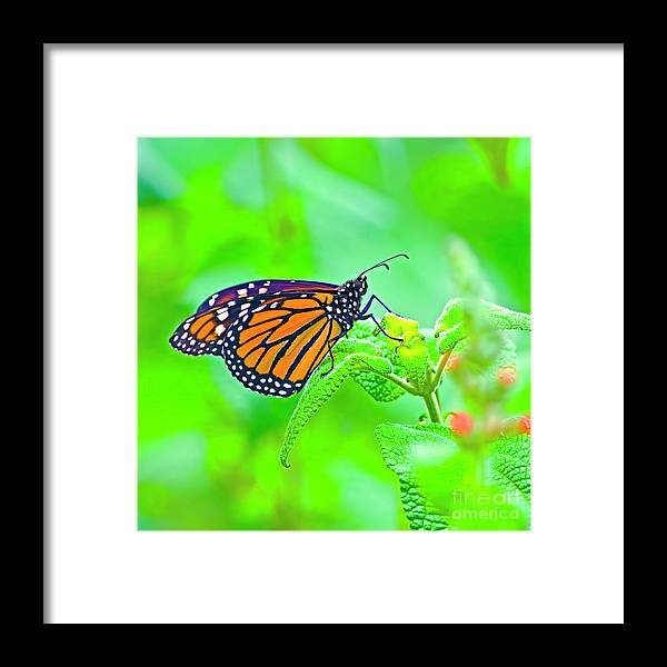 Butterfly Framed Print featuring the photograph Butterfly Series #13 by Edita De Lima