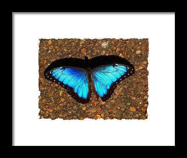 Shadow Framed Print featuring the photograph Butterfly Shadow by Judy Waller