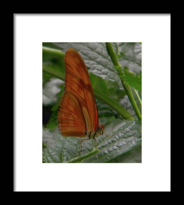 Butterfly Photography Framed Print featuring the photograph Butterfly Smile by Manuela Constantin