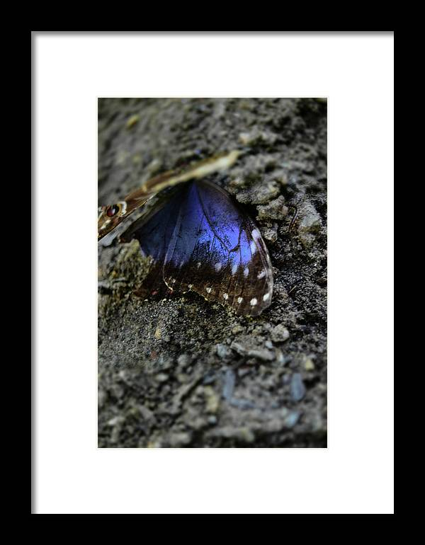 Colorful Butterfly Wings Laying On A Rock. Framed Print featuring the photograph Butterfly Wings by Raechel Genco