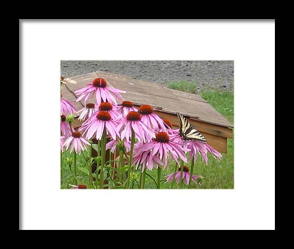 Framed Print featuring the digital art Butterfly's Lunch by Barb Morton