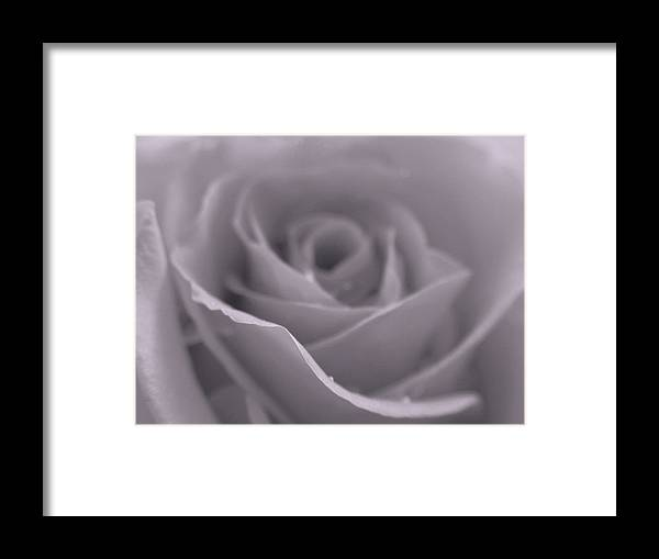 Rose Framed Print featuring the photograph Bw Rose by Juergen Roth