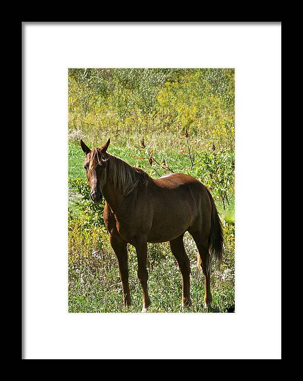 By Myself Framed Print featuring the photograph By Myself by Debra   Vatalaro