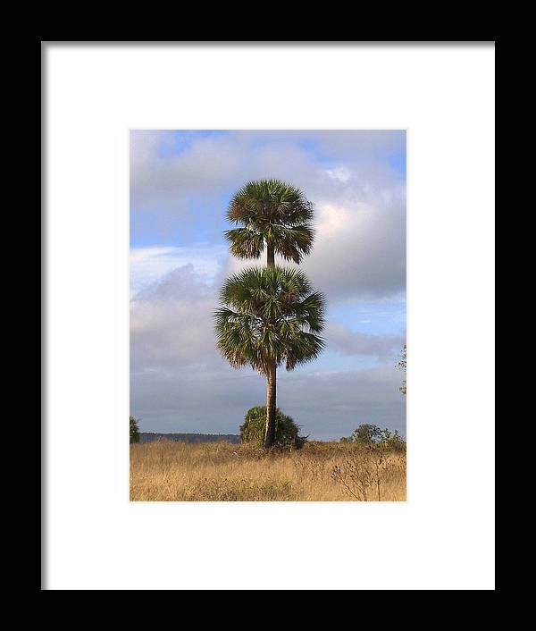 Nature Framed Print featuring the photograph Cabbage Palms by Peg Urban