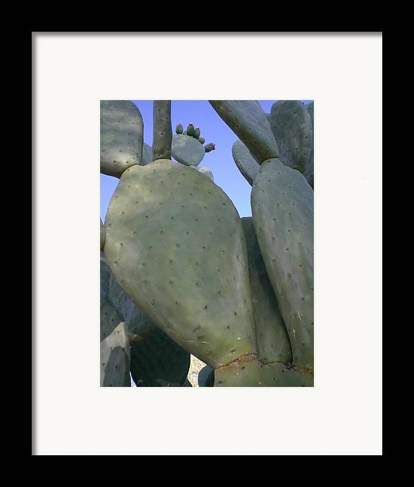 Cactus Framed Print featuring the photograph Cacti Everywhere by Aleksandra Buha