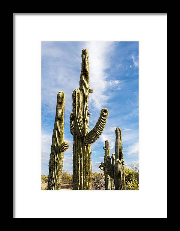 Desert Cactus Framed Print featuring the photograph Cactus Arms by Jon Berghoff
