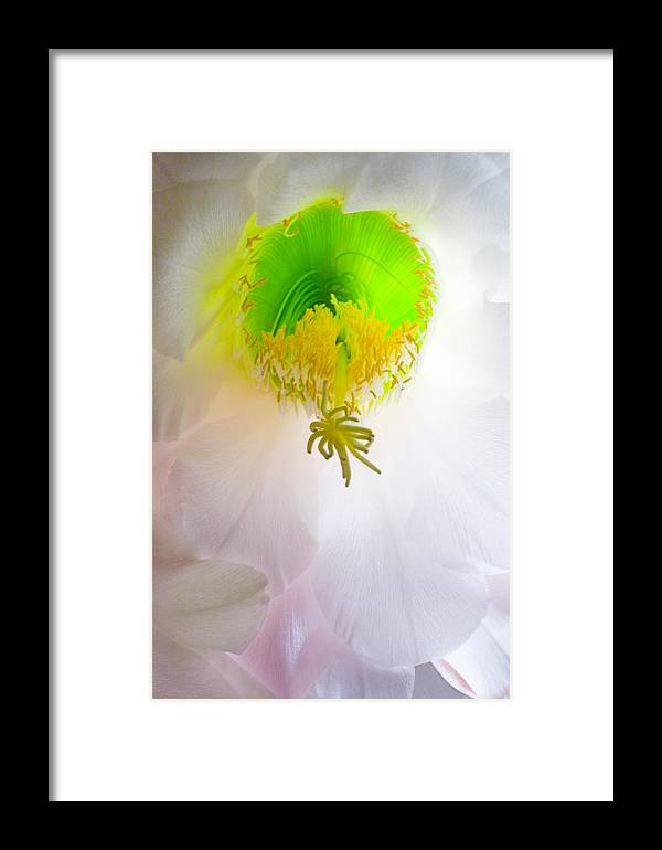 Cactus Bloom Framed Print featuring the photograph Cactus Bloom Number Six by Bob Coates