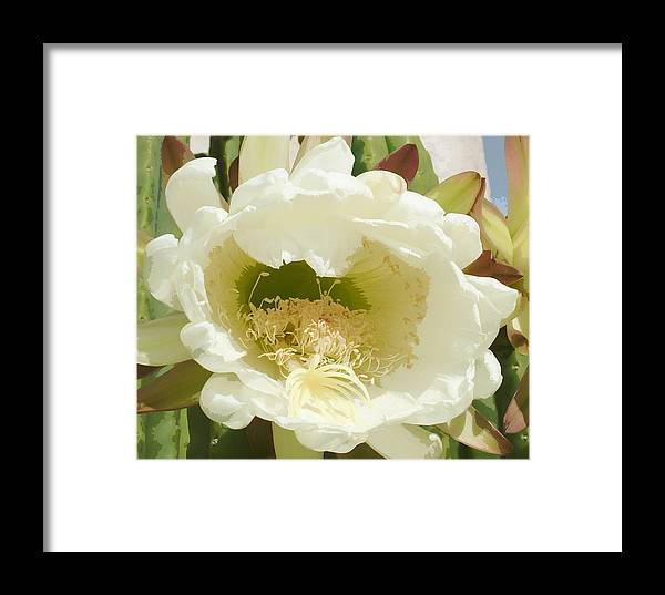 Flower Framed Print featuring the photograph Cactus Flower by Vicky Brago-Mitchell