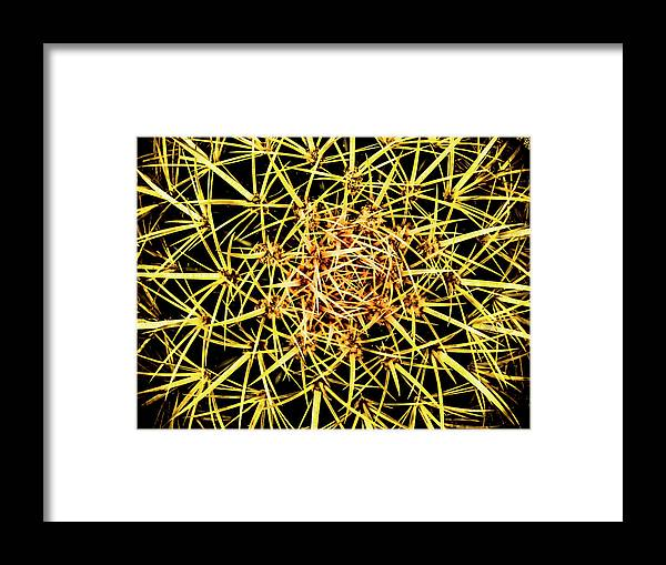 Cactus From Top Framed Print featuring the photograph Cactus From Top by Mar Nie
