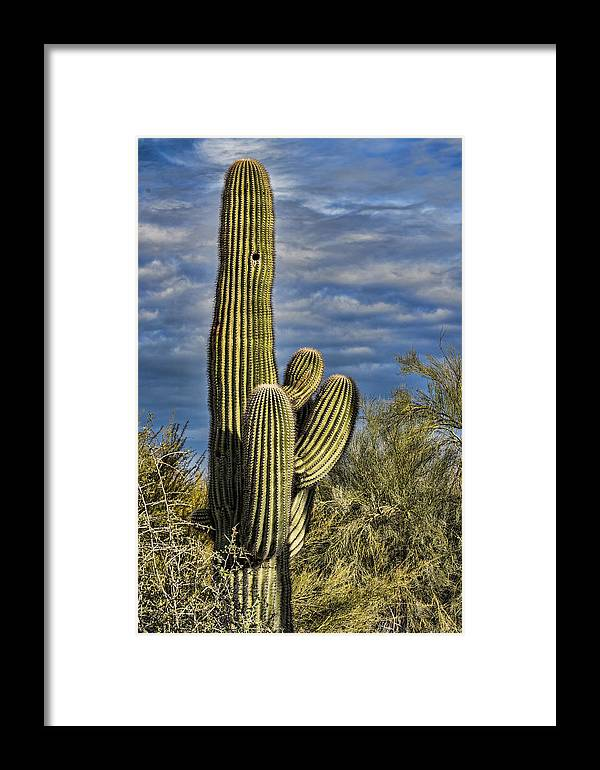 Desert Cactus Framed Print featuring the photograph Cactus Home by Jon Berghoff