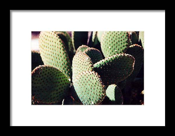 Field Framed Print featuring the photograph Cactus by Margaret Fortunato