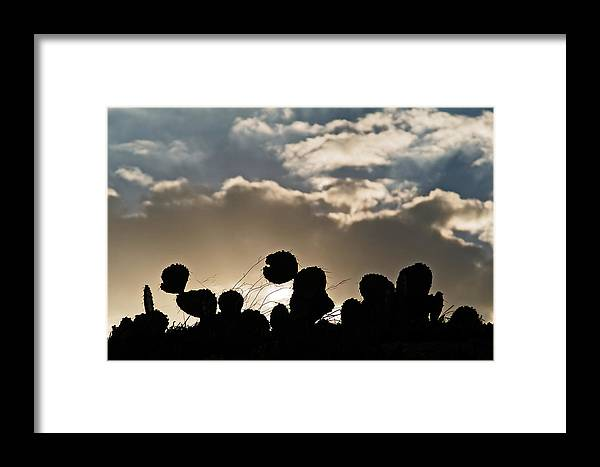 Cactus Framed Print featuring the photograph Cactus Sunset by Karl Manteuffel