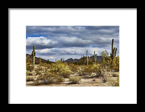 Cactus Framed Print featuring the photograph Cactus Valley by Stanton Tubb