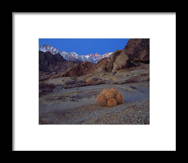Whitney Framed Print featuring the photograph Cactus With A View by Paul Breitkreuz