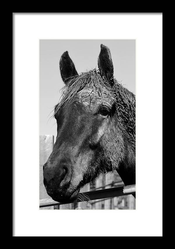 Horse Framed Print featuring the photograph Caked by Joanne Riske