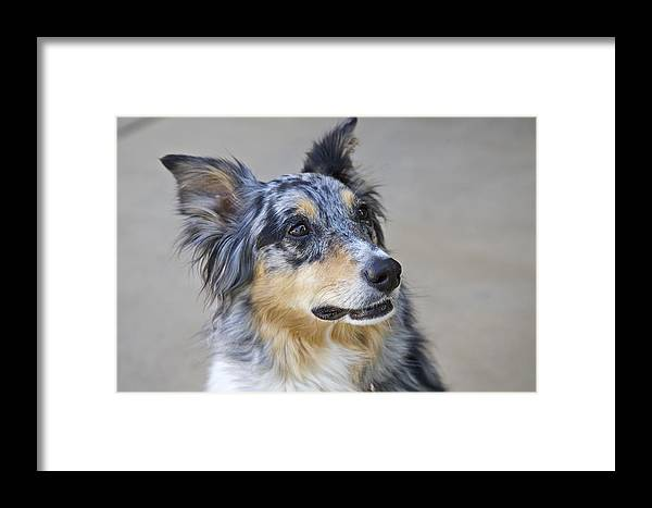 Dog Framed Print featuring the photograph Calico Dog by Robert Joseph