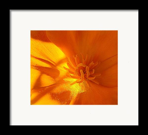 Flowers Framed Print featuring the photograph California Poppy by Liz Vernand