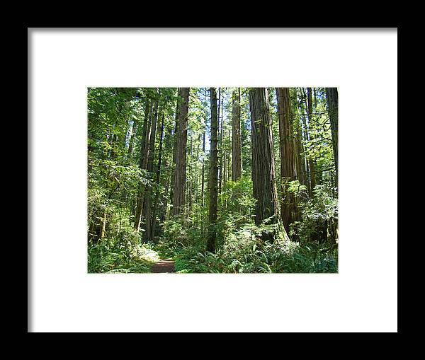 Redwood Framed Print featuring the photograph California Redwood Trees Forest art prints by Patti Baslee