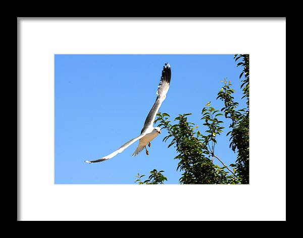 Bird Framed Print featuring the photograph California Seagull by Dennis Hammer