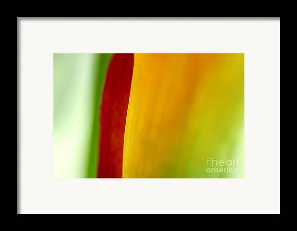 Calla Framed Print featuring the photograph Calla Lily by Silke Magino