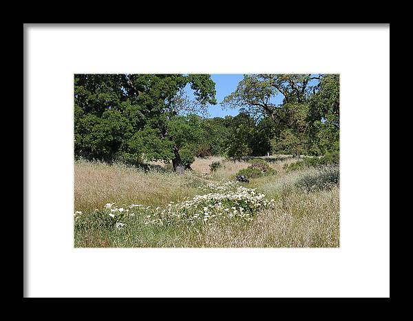 Calla Lilies Framed Print featuring the photograph Calla Lily Trail by Karen DiGerolamo