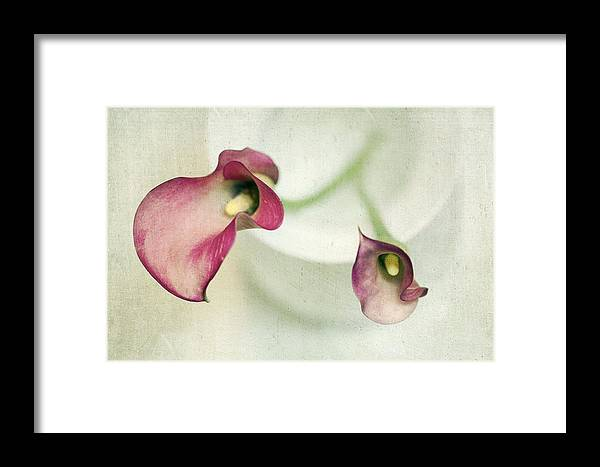 Cala Lily Framed Print featuring the photograph Callies by Rebecca Cozart