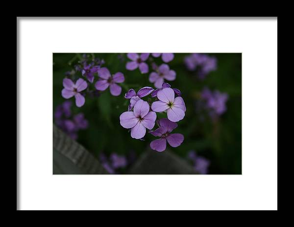 Flowers Framed Print featuring the photograph Calm in the Storm by Alan Rutherford