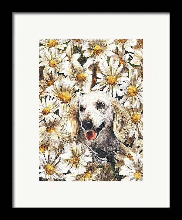 Dachshund Framed Print featuring the drawing Camoflaged by Barbara Keith