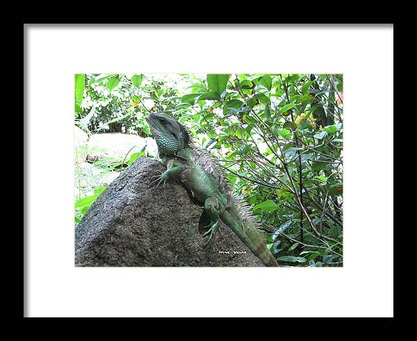 Reptile Framed Print featuring the photograph Camouflage by Ming Yeung