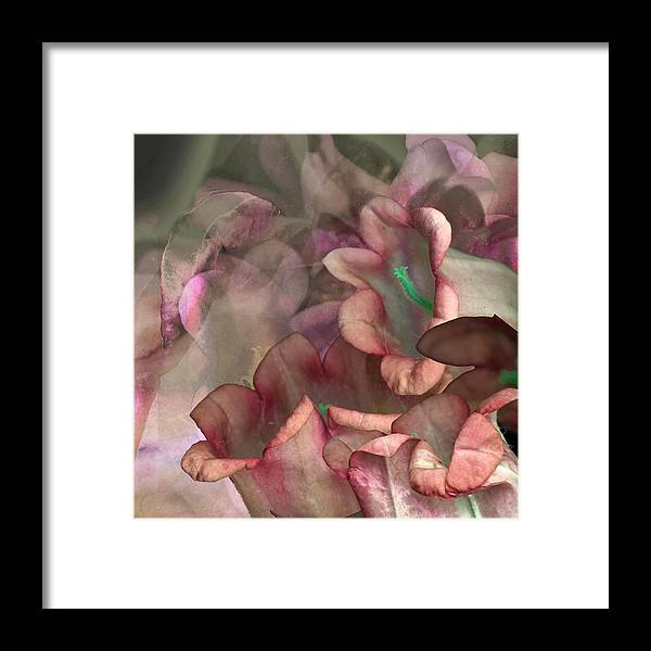 Campanula Framed Print featuring the photograph Campanula Two by Stan Bowman