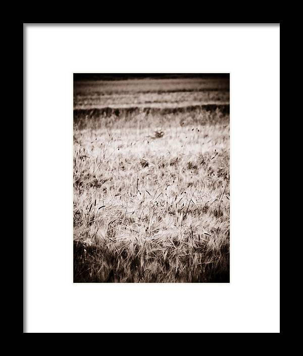 Country Side Framed Print featuring the photograph Campo by Felix M Cobos